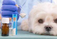 cane e farmaci