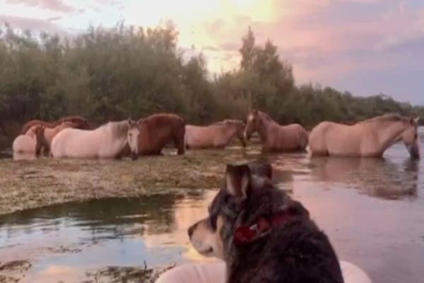Edie, la cagnolina che va in kayak e adora guardare i cavalli
