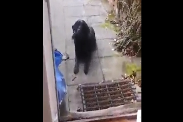 cane seduto
