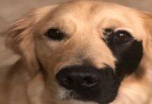 cane con macchia nera sul muso