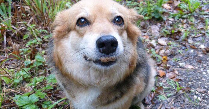 cani possono mangiare riso integrale