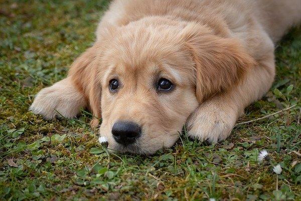 I cani possono mangiare il riso integrale? E in che modo?