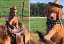 Cane che cavalca un cavallo