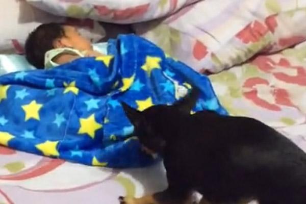 Cagnolino copre un bambino