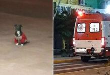 Cane salta su un'ambulanza