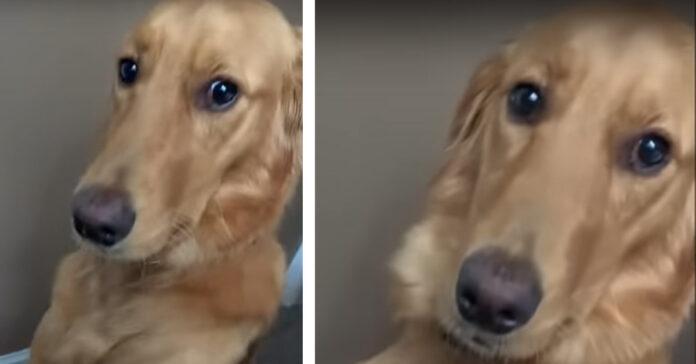 Cagnolino con sguardo dolce