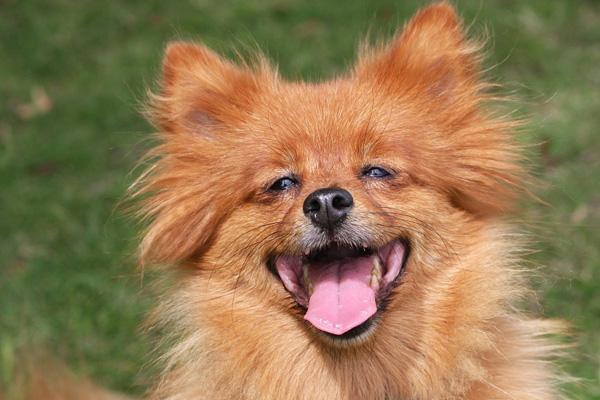 Cane che osserva felice