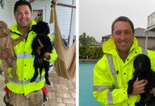 Cani salvati