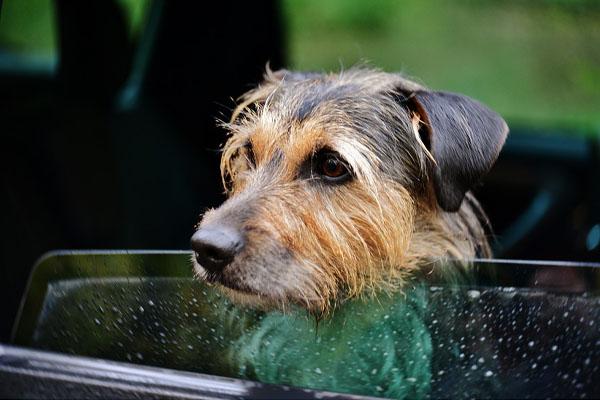 Il cagnolino sordo e cieco abbandonato a 13 anni che ora cerca la felicità