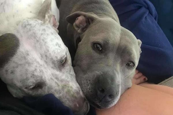 cagnolini sul divano