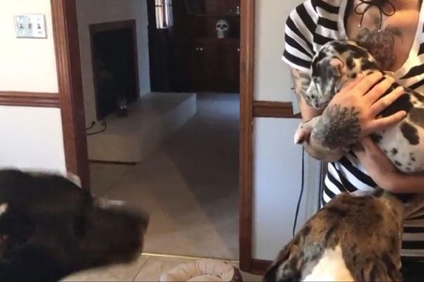 Alano conosce un cucciolo