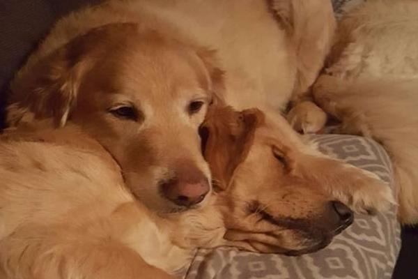 due cani sdraiati