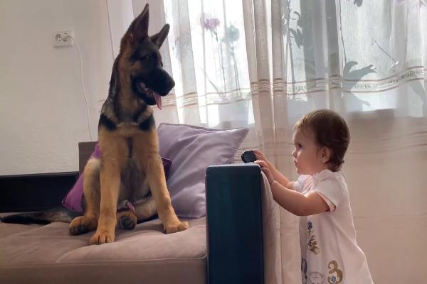 Pastore tedesco gioca con la sorellina umana (VIDEO)