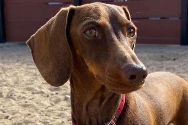 Pip, il cane che era lontano dalla sua famiglia per colpa del Covid, è riuscito a riabbracciarla dopo 16000 Km