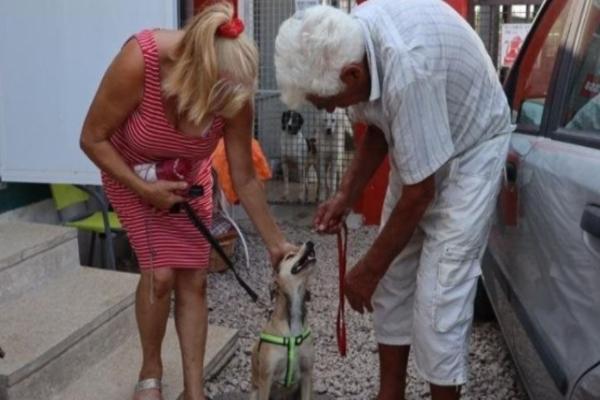Pucina, la cagnolina scappata prima di prendere il traghetto da Olbia è tornata a casa