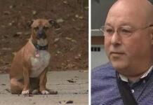 Cane che ha salvato il proprietario