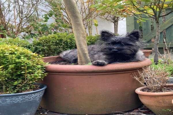 Slug, il cagnolino che ha imparato ad accendere e a spegnere le luci di casa (VIDEO)