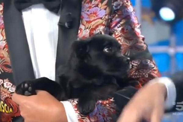 """Striscia La Notizia, arriva il nuovo cagnolino e parte il """"toto-nome"""" (video)"""