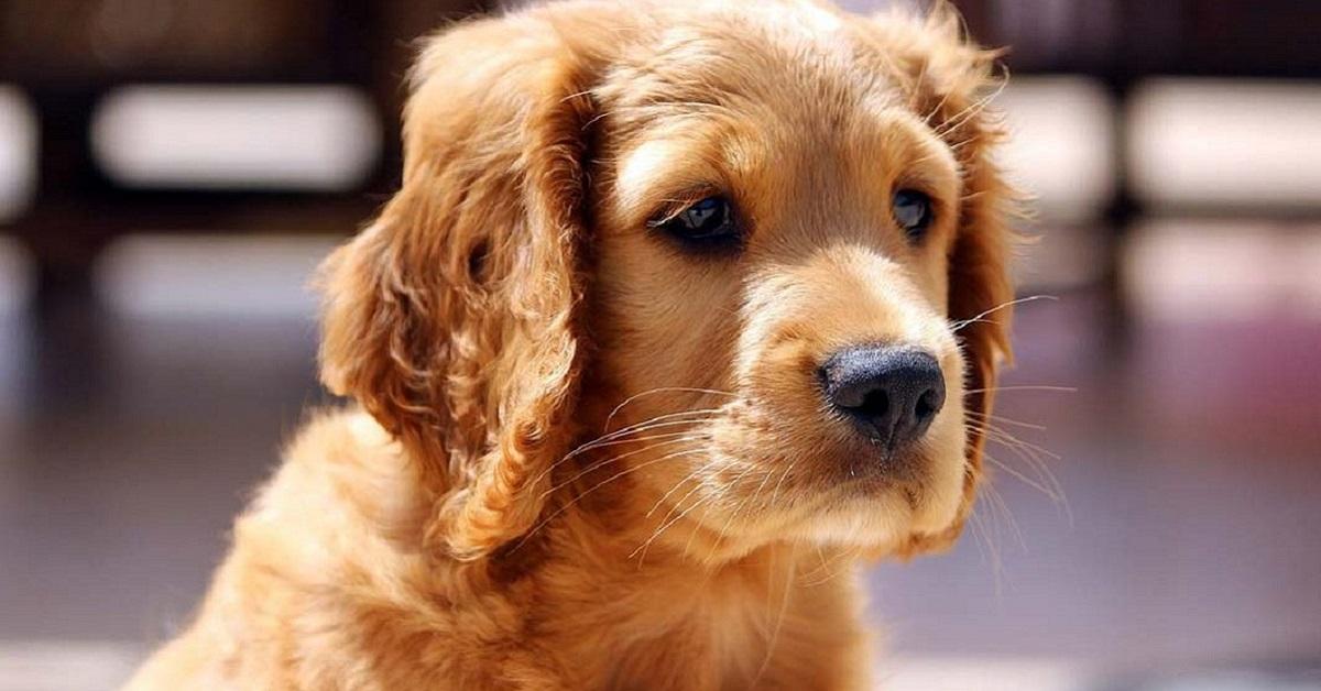 cucciolo di cane curioso