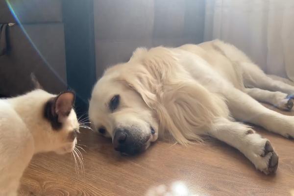 Cane e gatto si amano e lo dimostrano ogni giorno (VIDEO)