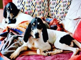 ariègeois sul divano