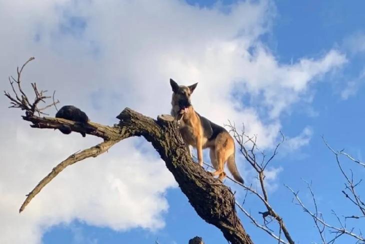 baby cane pastore tedesco