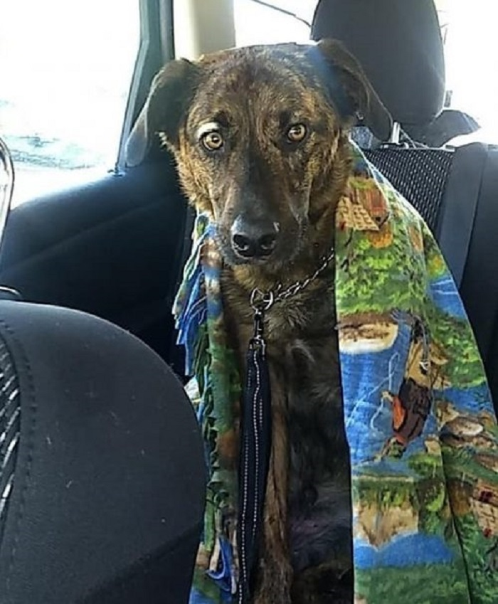 Beau, il cagnolino smarrito finito su un'isola (FOTO)