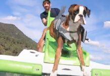 bobby cucciolo boxer che adora acqua e sorprese