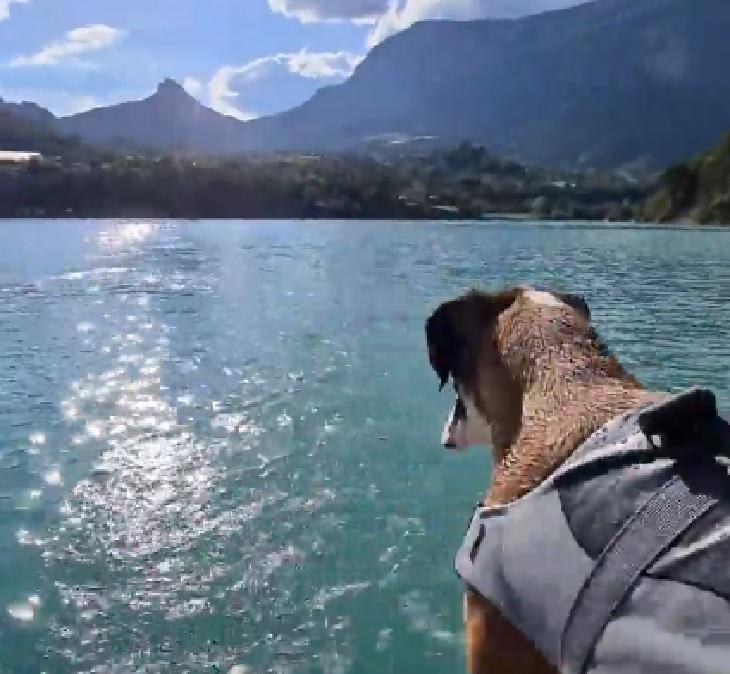bobby cane sorpresa magnifica lago