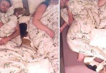bruno cane beagle che dorme in posizioni buffe