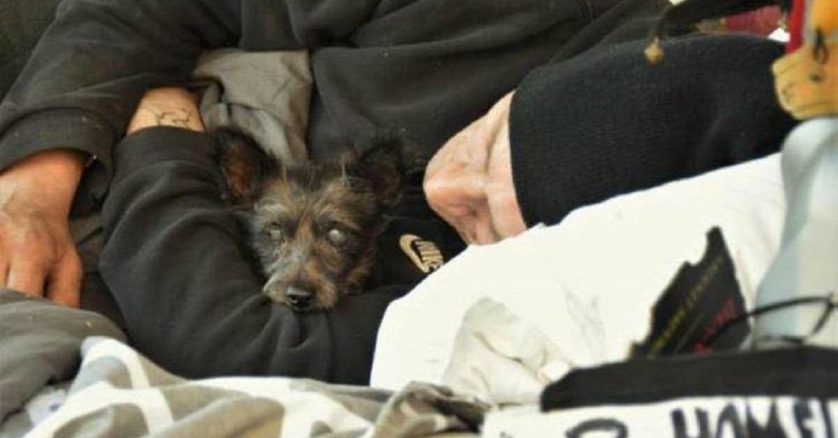 shaggy cagnolino scomparso