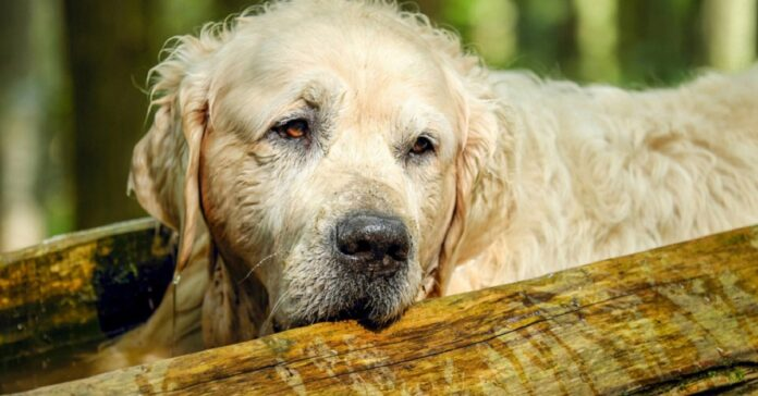 cane su tronco