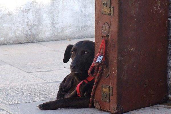 cane pronto a partire