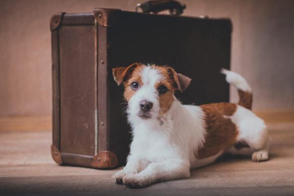 cane con valigia