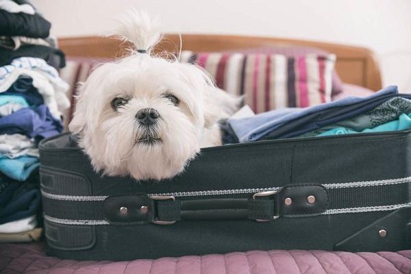 cane dentro la valigia