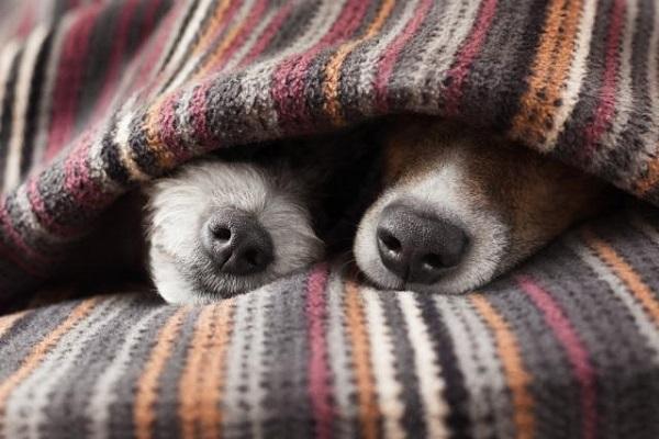 Cane anziano ha freddo: come fare a riscaldarlo e a tenerlo al sicuro
