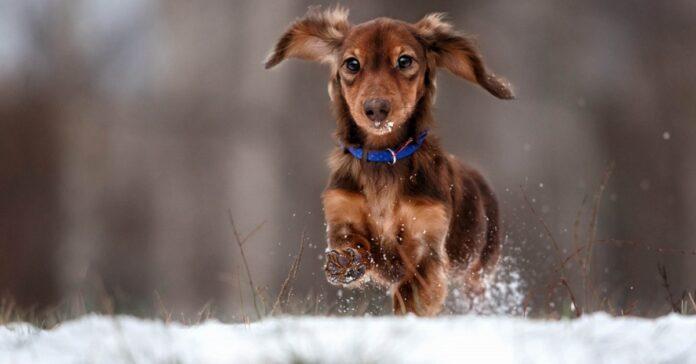 cagnolino gioca sulla neve