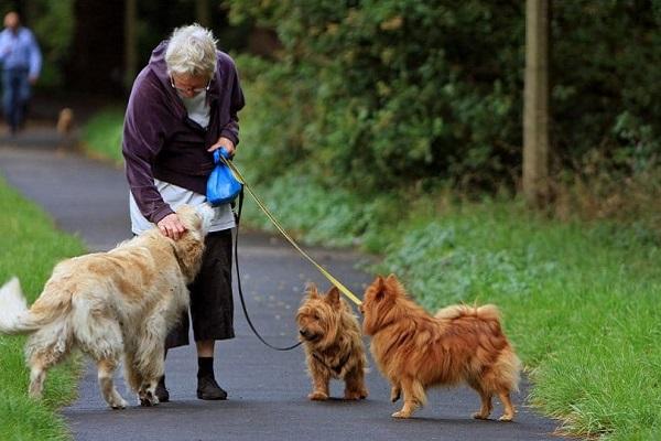 cani anziani che fanno la passeggiata