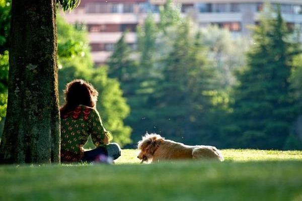 cane anziano con proprietaria