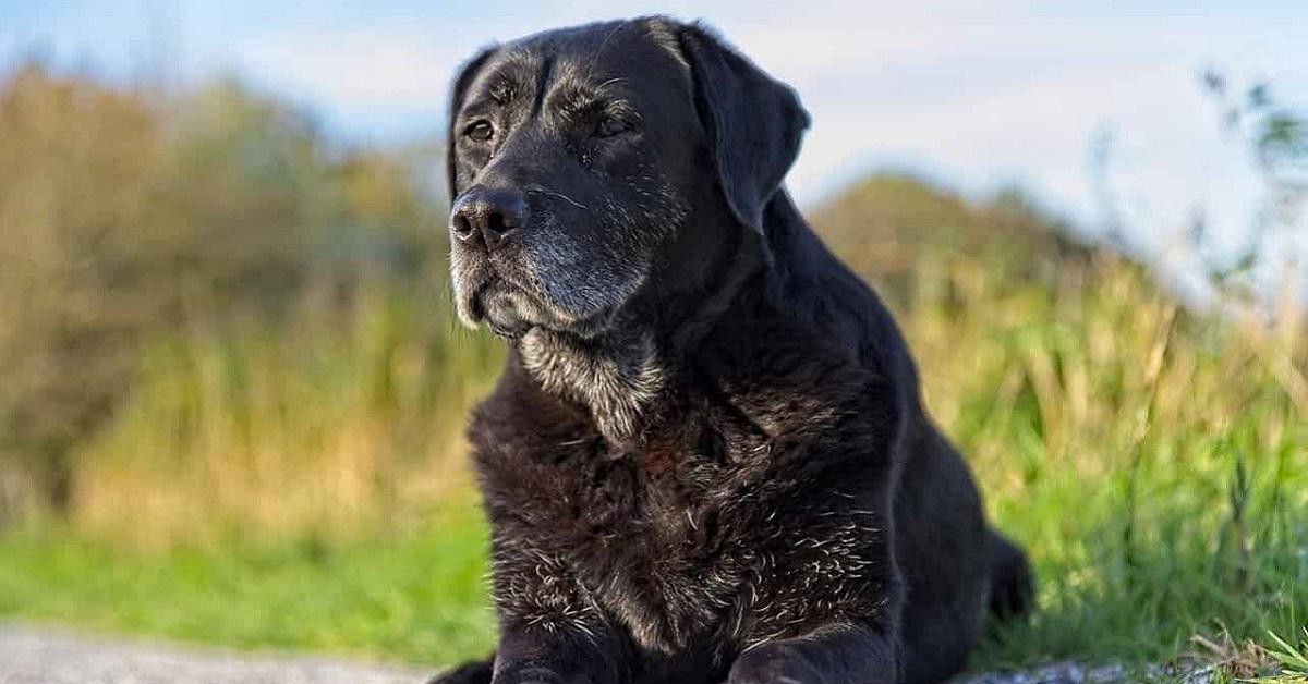 cane vecchio per strada