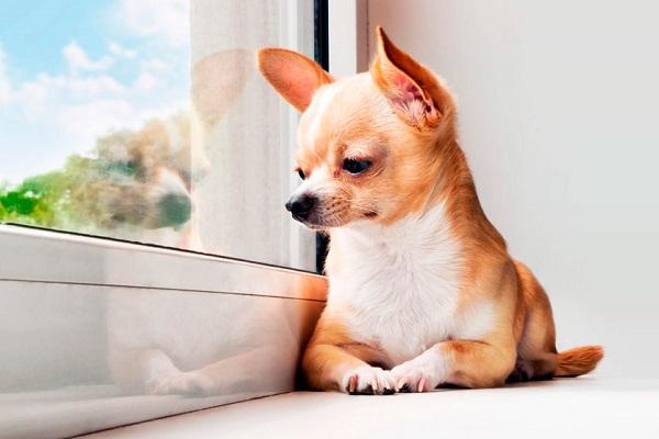 Quando un cane anziano rifiuta il cibo? Cosa fare e come reagire