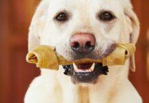 cane con osso fra i denti