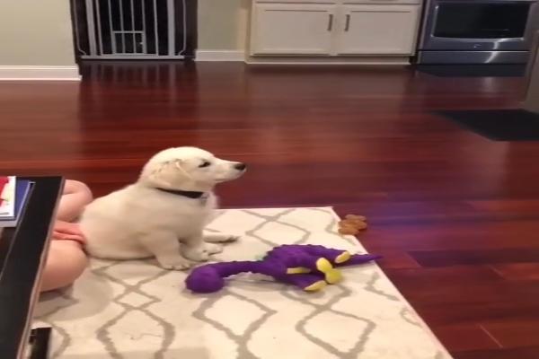 Cucciolo di cane guarda un cartone animato (VIDEO)