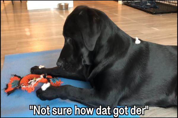 Cane in quarantena: cosa fa e come trascorre le giornate (VIDEO)