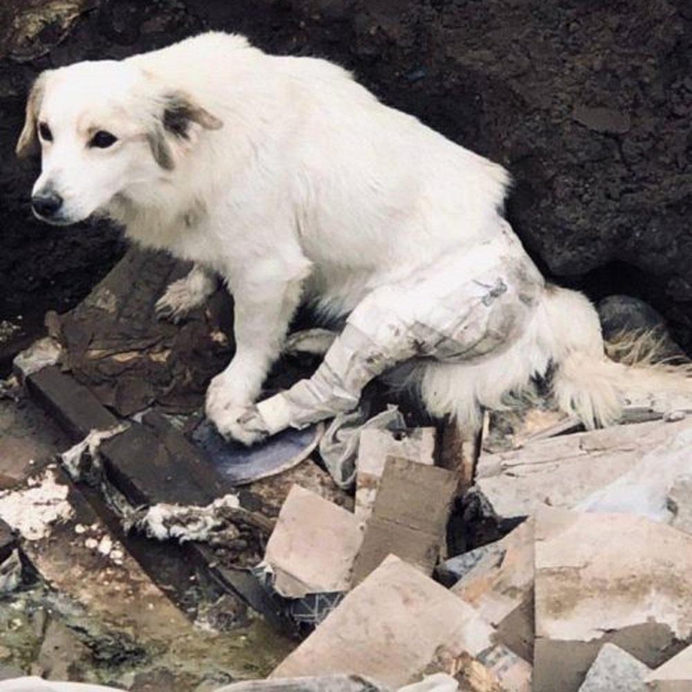 cucciolo disperato abbandono ex famiglia perù