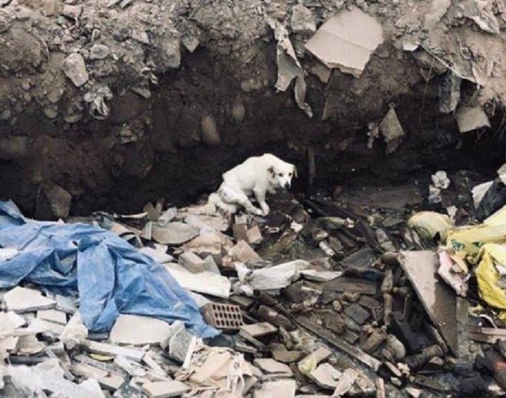 cane villa chorros discarica perù