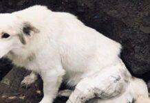 cane salvato nei pressi di una discarica