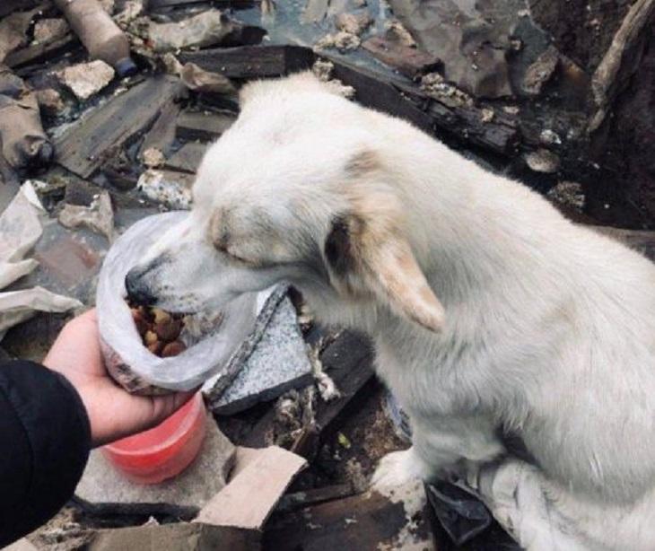 cane salvato da discarica soccorritori