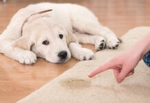 cane fa pipì sul tappeto