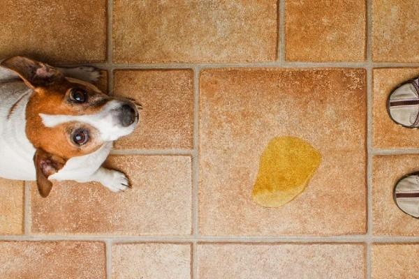cane che fa la pipì